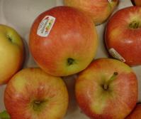 Tre äpplen, tre äpplen, från pepparkakeland…