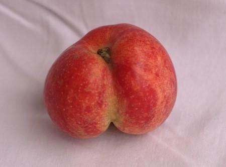 Röväpplet - Nästan som ett vanligt äpple, fast med en rejäl röv där bak