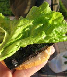 Hårddisk på hamburgerbröd med dressing och salladsblad