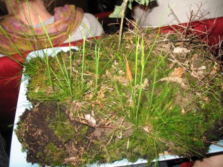 Hoppalappa - Plötsligt får jag ett fat med gräs och mossa i famnen